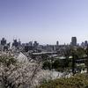 帰り道は北野天満神社の桜。