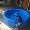 ちびぞう、プールに入る