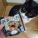 今日の黒猫モモとハチワレ猫ナナの動画ー1056