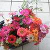 花卉の定植も進めています