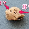 【考古学クイズ】この動物はなんでしょうか【弥生時代の土人形】