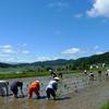 裸足で田植え、ヨモギで草餅づくり。2018年の飯山市百姓塾がはじまりました