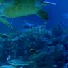 ◆新曲!『AQUA アクア』海の中を漂っているような綺麗な曲です♪◆