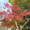 紅葉と桜花