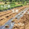夏野菜の種撒き・苗植え・4月に植えた野菜の生育状況