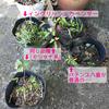 花植えた(未完)色々
