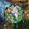 豆苗ツナマヨ海苔巻