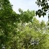散文夢想「夕暮れ時が包む森は吹く風が万緑を揺らす爽快感に抱かれて」。