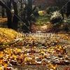 落ち葉 午後の公園