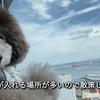 2021.826  【横浜を散策‼️】 Uno1ワンチャンネル宇野樹より