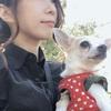 こた社長(15才)、愛犬の変わり行く食の好みを探る穏やかな暮らしについて書いてみた。