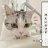 猫雑記 ~バスタイムの侵入者~