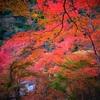 京都の紅葉 らくたろうの過去の紅葉画像を紹介 ~今年はどこに行こうかな~