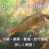 セボシタビラの特徴 外観・飼育・繁殖・釣り情報を詳しく解説!