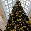 イオンモールのクリスマスツリーと「きのとやファーム店」のイルミネーション