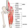 お尻の筋肉が弱ると大腿筋膜張筋が固くなる!大腿筋膜張筋のストレッチ方法と腰痛との関連