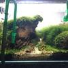 世界水草レイアウトコンテスト2020(IAPLC2020)に応募した水槽を紹介します!!