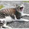 初三浦半島へ!猫だ〜!【ラスト】