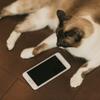 【スマホがあれば出来る隠し技】仕事で疲れた時にすぐ猫の癒しを得る方法