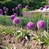 紫の花とお婆ちゃん