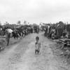 1945年7月7日 『ハワイに送られた捕虜』