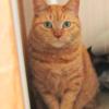 シニア猫さん必見! 甲状腺機能亢進症に低ヨウ素フード2021