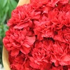 母の日にカーネーションの花束を贈りました