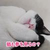 猫も夢を見るの?寝言は?