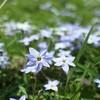 春の花と緑