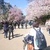 桜三昧の秋田旅。弘前城、菜の花ロード、角館。