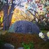 熱海梅園🌸〜静岡