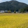 和歌山県の世界文化遺産、丹生都比賣神社(にふつひめじんじゃ)までプチツーリング。ここは白州正子が「天の一廓に開けた夢の園」と言った天野の里。
