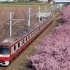 京急×河津桜 2020