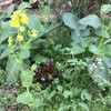 菜の花咲く頃の庭