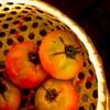 トマトが旬を迎えています!