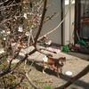 桜の木の下のお花見では、飲食を全面禁止にすべし。