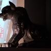 ■日本を変えた千の技術博:鬼龍子の案内でめぐる明治150年「千の技術博」