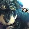 名前はピノン。