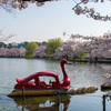 東京の定番桜名所 上野公園〜目黒川まで 少し混雑を避けたお花見スポット