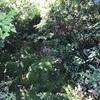 樹木病害虫防除