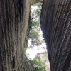 天空の城ラピュタ!鋸山チャレンジ冒険ルート。