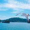 【宮城旅行ブログ】絶景の日本三景「松島」で行くべき観光地9選【大人の休日・日帰り・デートにも】