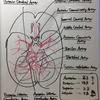 【Courseraで神経科学を学ぶ(3)】脳への血液供給。脳の血管の種類、分類を見ていこう!