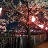 深井の水賀池公園で夜桜ライトアップを見てきた【大阪府堺市中区】