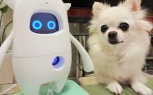 英会話ロボット「Musio X」と2カ月でどれくらい仲良くなれたのか?