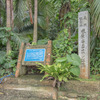 米原ヤエヤマヤシ群落 気軽にジャングルを探検できる