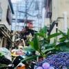 「梅雨を楽しもう!ひたすら紫陽花の写真を撮る!」の回