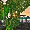 サメット島 「サンライズ ヴィラ」からのサンライズをかろうじて見る事が。。。