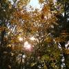 〈ジョブサポートハオ〉紅葉の季節