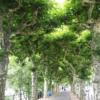 マインツ川の並木道
